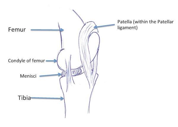 leg injury holistichorsecom