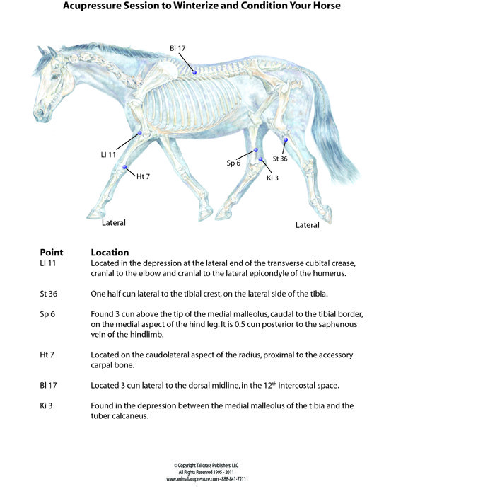 Winterize Your Horse with Acupressure - HolisticHorse com