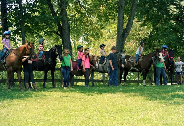 Horses working at summer camp