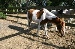 malnourished horse - getty