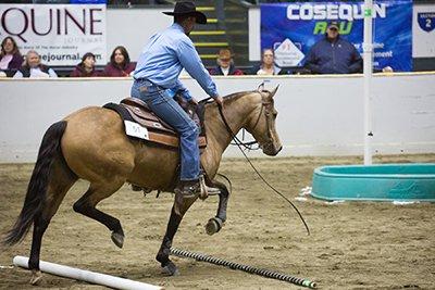 Equine Affaire Photo 1.jpg