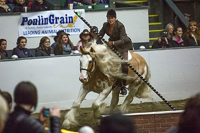 Equine Affaire Photo 2.jpg