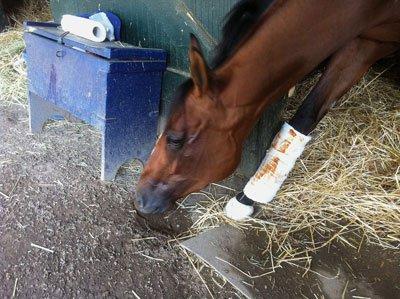 horse-eating-dirt.jpg