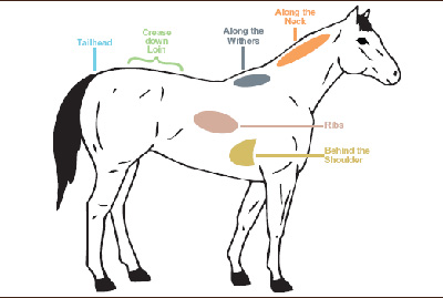 Fat areas on a horse