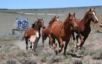 wild_horse_helicoptoerroudu.jpg