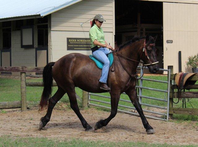 Caroline riding Friesia