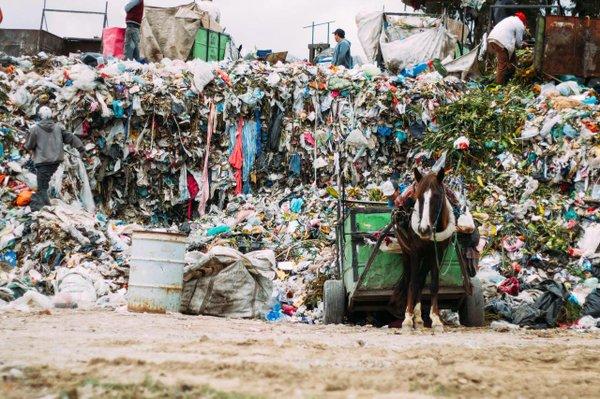 Garbage Dump horse