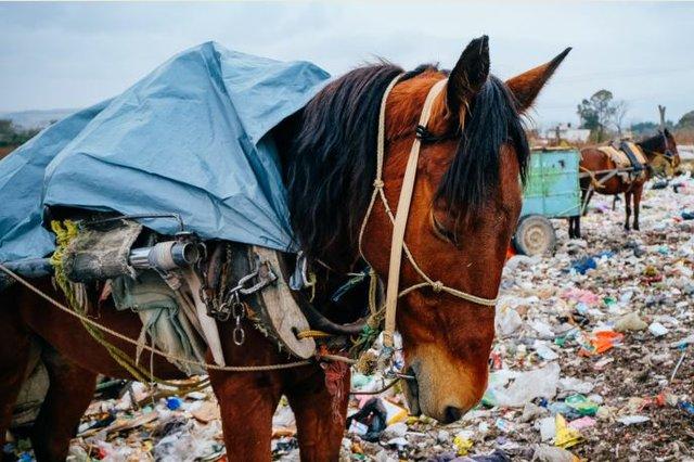 Horse Garbage