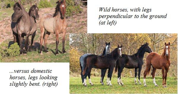 Domestic Horses