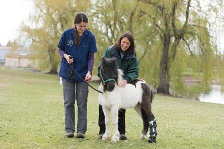 Pony new hoof