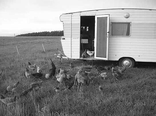 Mobile chicken units and healthy land