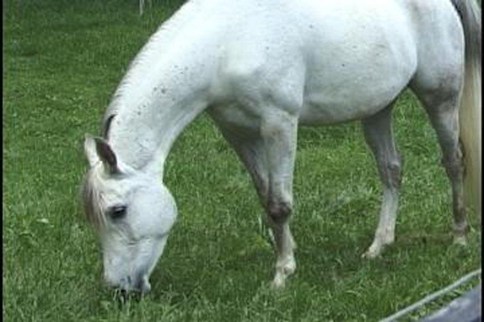 Eosinophilic enteritis in horses with motor neuron disease for Equine motor neuron disease in horses