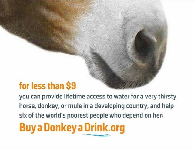 Brooke USA Buy a Donkey A Drink
