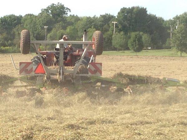 Sifting Hay