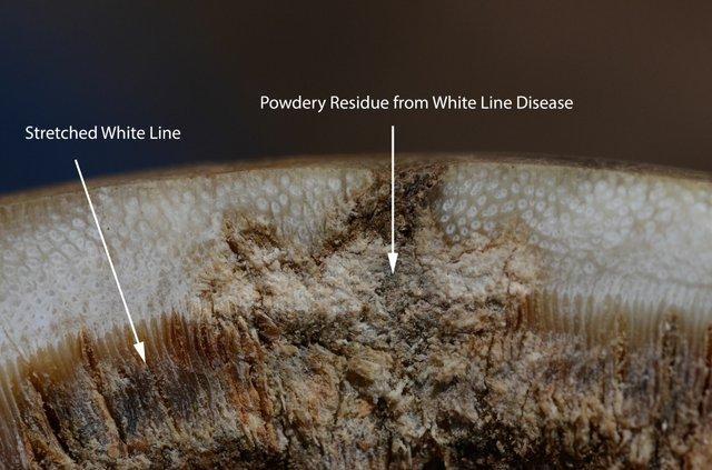 Powdery Residue