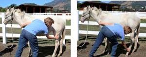 massage_foal_figure6_handpo.jpg