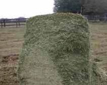 Square bale in field