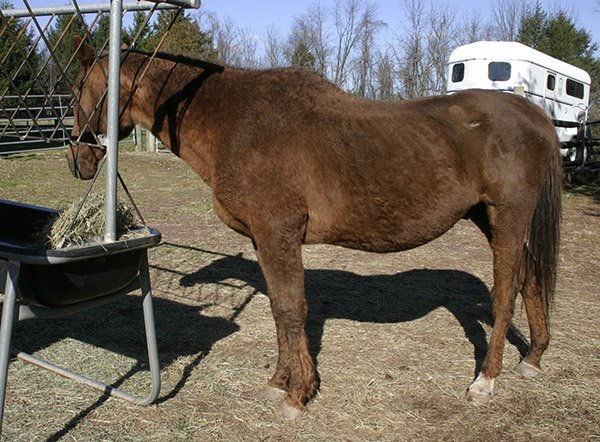 older horse muscle loss