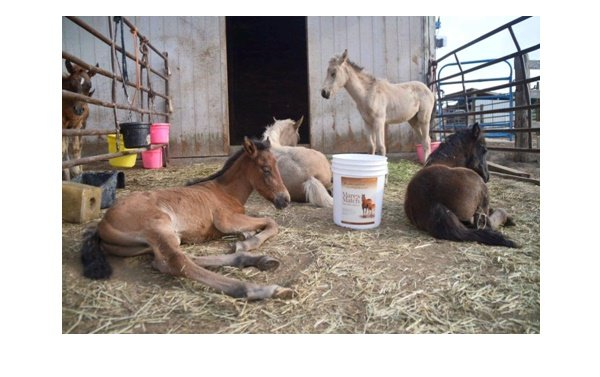 Foals in a corral
