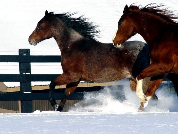 ThomaShaw2-horse in snow.jpg