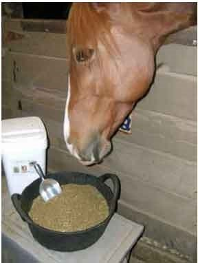 horse with hemp supplements