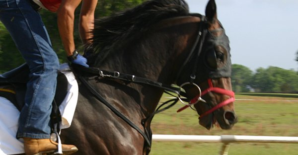 Tight Noseband