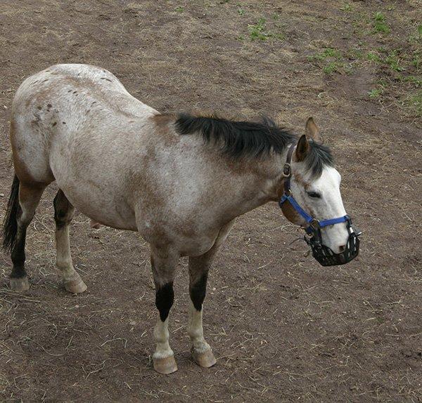 Horse in Muzzle.jpg