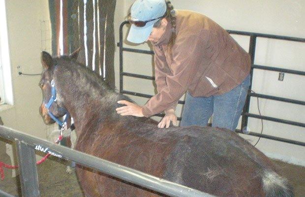 Chiropractic Horses' Back