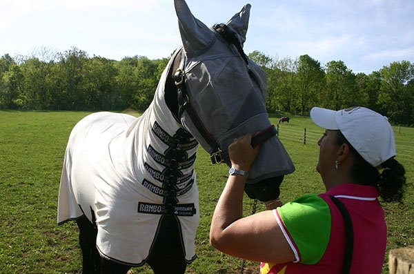 fly mask and sheet