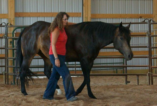 Horse Misbehavior1