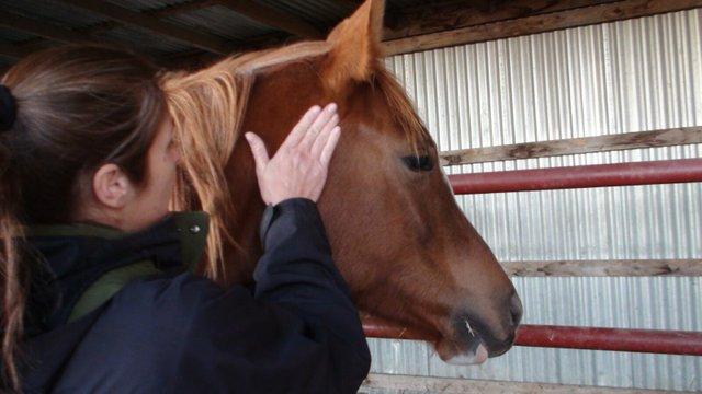 Massage Horse's Head