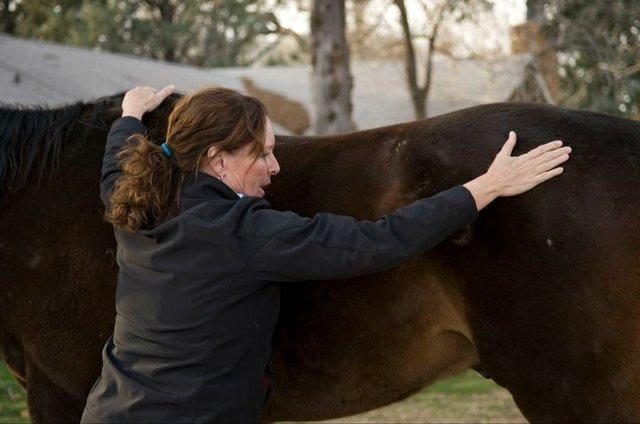 Bowen Technique on Animals