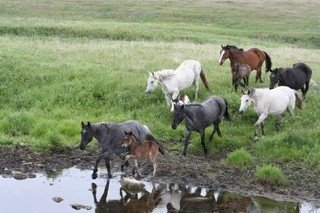 SBRifkin horses at water.JPG