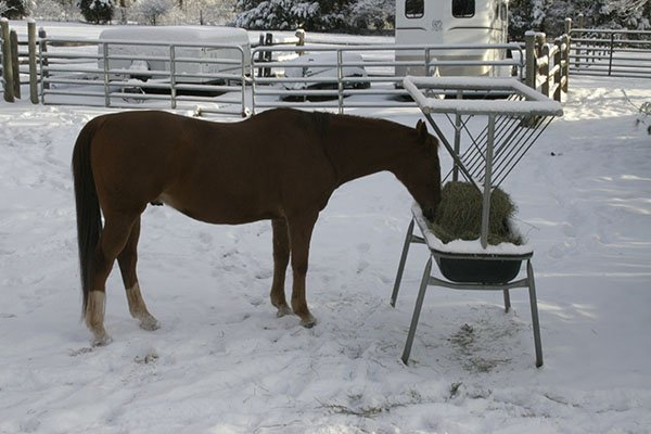 Horse in snow with hay