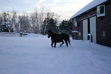 Horse in snow-barn