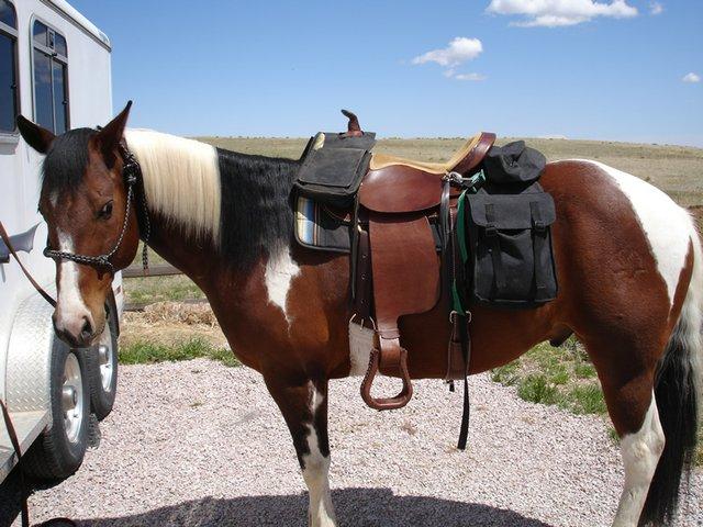 horse-saddle-bags.jpg