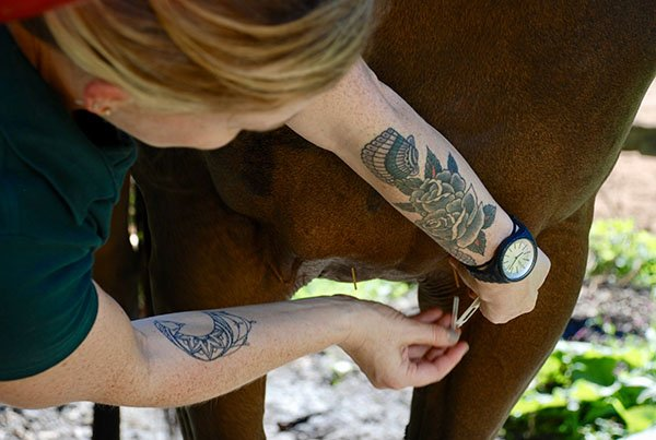 Acupuncture Horse