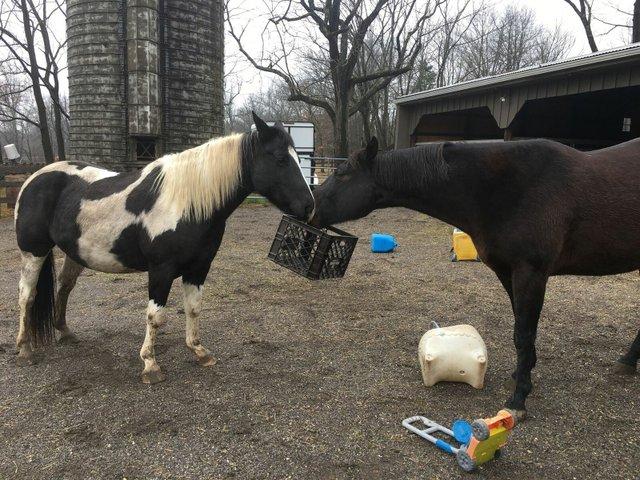 bored horse 1.jpeg