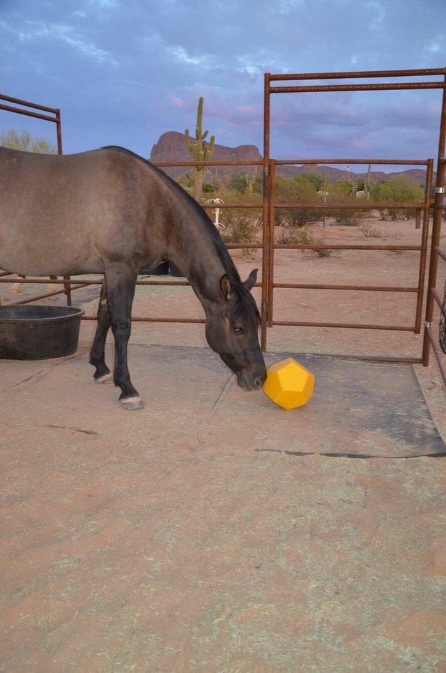 bored horse 3.jpeg