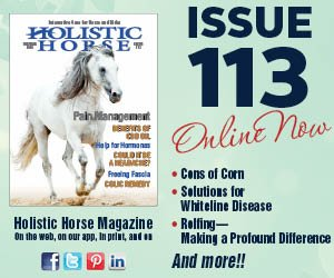 Issue 113 ad