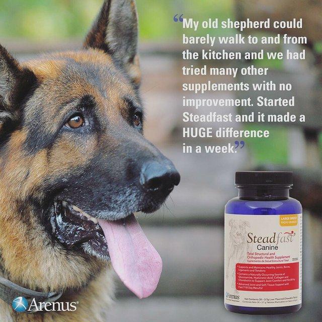 Arenus Steadfast Canine
