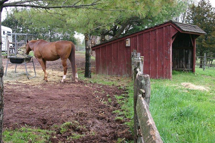 Dry Paddock next to spring grass