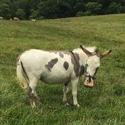 IR Donkey