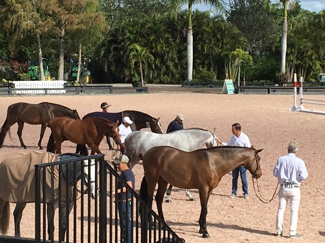 Horse and Grooms awaiting a call