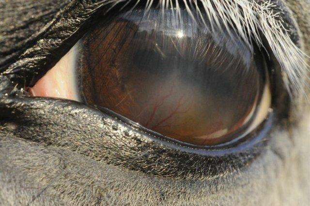Cloudy horse eye