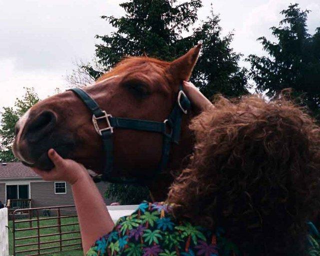 CranioSacral work on a horse