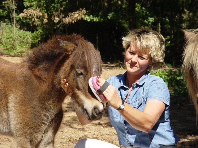 Women grooming pony