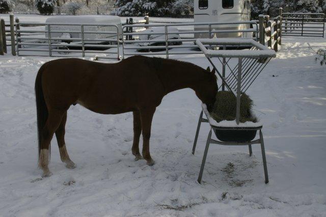 Winter Horses 005.jpg