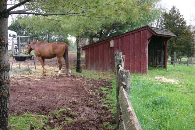 Horse in drylot-spring grass.jpg
