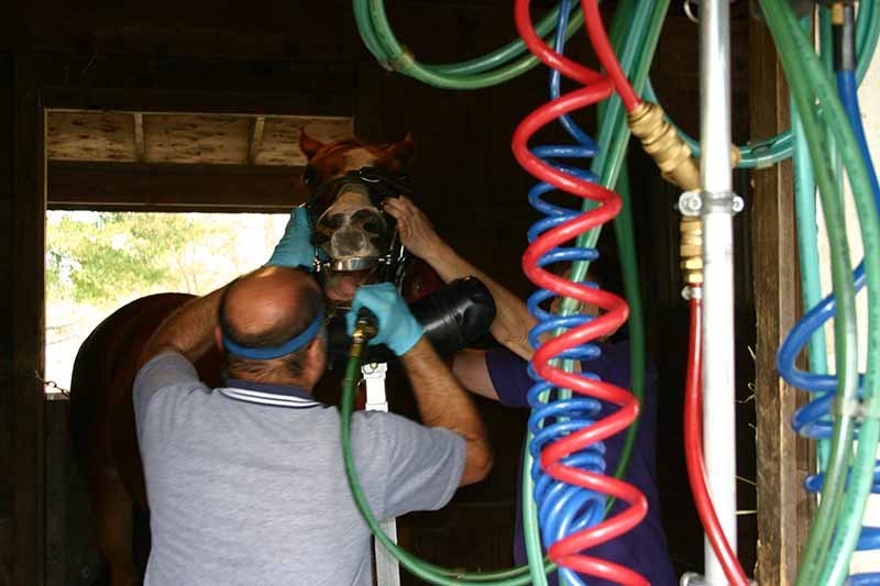 Equine Dentistry with Power Tools